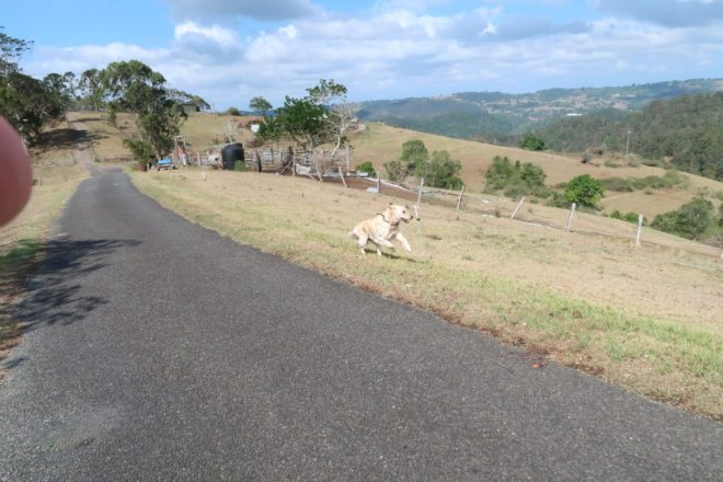 cooper galloping along a country road