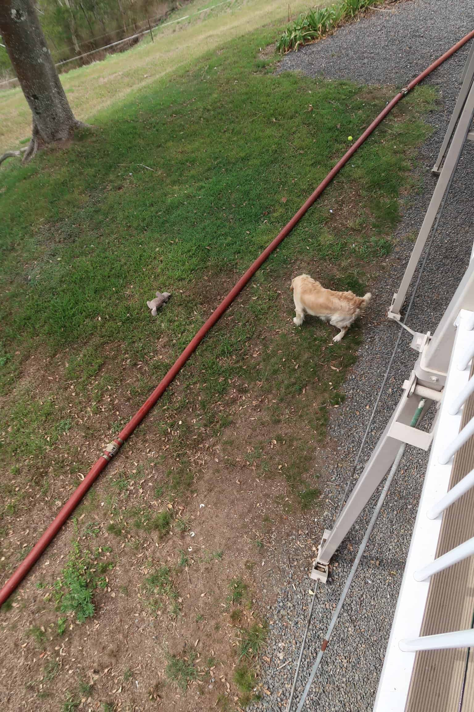 cooper and the water truck hose